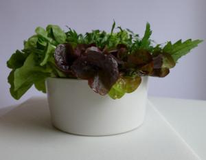 NPS Salatbouquet